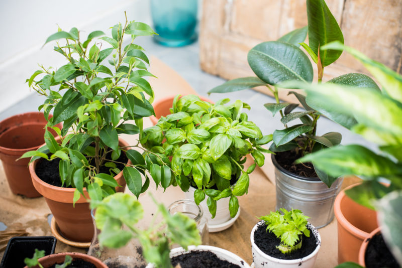 Household Plants That Can Improve the IAQ in Your Home